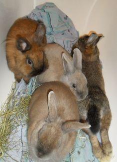 Zusammenführung mehrerer Kaninchen zu einer Gruppe in der Badewanne