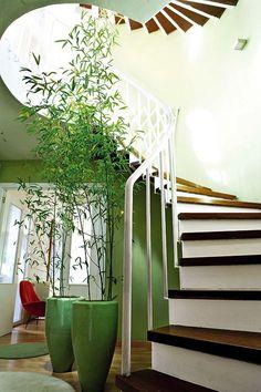 Bamboo in indoor planters