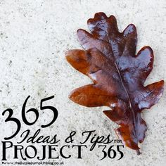 365 ideas and tips for photography Project 365. Take a photo a day, every day for 365 days!