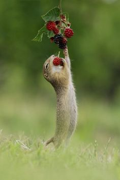 Wildlife photography by Julian Rad – Ego – AlterEgo - Animal photography Cute Little Animals, Cute Funny Animals, Cute Creatures, Beautiful Creatures, Nature Animals, Animals And Pets, Wildlife Photography, Animal Photography, Wild Photography