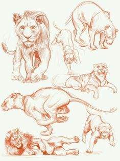 Lion sketch on Behance : Lion sketch on BehanceYou can find Behance and more on our website.Lion sketch on Behance : Lion sketch on Behance Pencil Art Drawings, Cool Drawings, Drawing Sketches, Tattoo Sketches, Tattoo Drawings, Tattoos, Lion Drawing, Drawing Poses, Animal Sketches