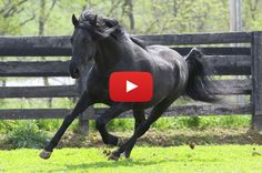 Make the most of your winter downtime with these great horse-related YouTube channels, by Julia Arnold @horseillusmag. #horses #youtube #horsevideos
