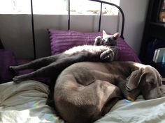 Maru isn't the ONLY kitteh with a sunbeam!