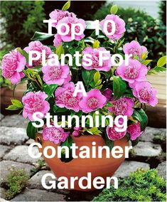 This is an interesting list of dwarf shrubs and flowers that are ideal for growing in small containers. The great advantage of a small planter is that it is easy to move to a prominent position while in flower and then further back once the blooms have fa Container Garden Design, Plants, Garden Plants Design, Plant Design, Container Flowers, Flowers Online, Small Planter, Organic Container Gardening, Dwarf Shrubs