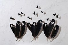kunst-vogels-veren-Chris-Maynard
