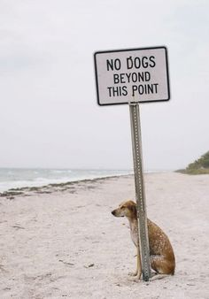 no dogs beyond this point (this does not mean me)