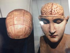 Phrenology - the detailed study of the shape and size of the cranium as a supposed indication of character and mental abilities. A party game in Birdie & Jay.