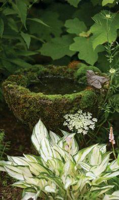 Pergola For Sale Cheap Bird Bath Garden, Garden Cottage, Water Garden, Garden Art, Cacti Garden, Garden Living, Sacred Garden, Paludarium, Water Features In The Garden