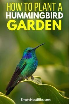 Hummingbird plants to attract hummingbirds to your garden. #garden #gardenideas #gardening