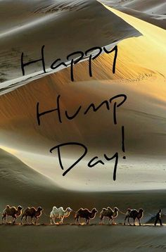 Happy Hump Day Image With Camels wednesday hump day humpday hump day camel wednesday quotes happy wednesday wednesday quote happy wednesday quotes hump day camel quotes Hump Day Gif, Hump Day Images, Hump Day Quotes, Hump Day Humor, Morning Quotes, Wednesday Greetings, Wednesday Hump Day, Happy Wednesday Quotes, Wednesday Humor