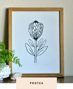 Protea linocut print by Samantha Hirst