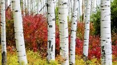 Colorado Drives Perfect for Fall | Colorado.com