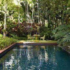 A backyard pool glitters darkly amongst lush foliage.