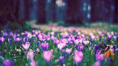 Flores junto a un bosque HD