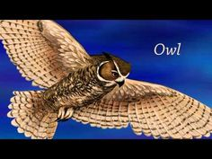 Night Animals (for kids) Video introducing Nocturnal Animals