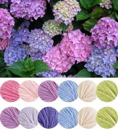 Awww I love hydrangea Yarn Color Combinations, Beautiful Color Combinations, Colour Schemes, Colour Pallette, Color Palate, Hydrangea Colors, Hydrangeas, Design Seeds, Color Swatches