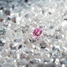 Argyle Pink Diamonds Collection // Rohan Jewellery