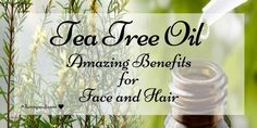 Do you want a clear skin? Put oil on skin.Tea tree oil uses can be a effective remedies for your skin and hair. Check out useful remedies. Clear Skin Detox, Clear Skin Face, Tea Tree Oil Uses, Tea Tree Oil For Acne, Clear Skin Overnight, Oils For Dandruff, Coconut Oil For Acne, Skin Firming, Oils For Skin