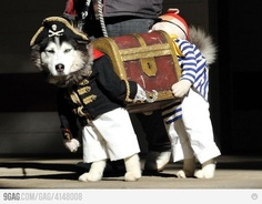 Quickly the piraterazzi are on to us...    [best dog outfit EVER]