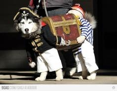 Funny dog costume.
