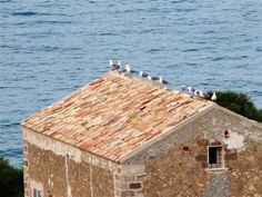Well-ordered seagulls on a roof