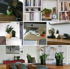 Tener plantas en la oficina incrementa la productividad. ¡Confirmado!