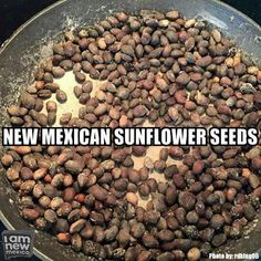 Mmmmm New Mexico Style, New Mexico Homes, New Mexico Usa, New Mexico Albuquerque, Albuquerque News, Mexico Funny, Mexican Sunflower, Santa Fe Style, New Mexican