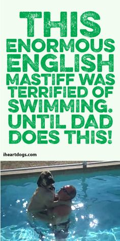 This ENORMOUS English Mastiff Was Terrified Of Swimming... Until Dad Does This! :)