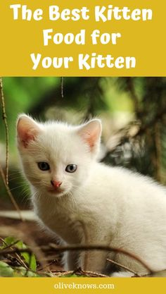 The Best Kitten Food for Your Kitten - When it comes to choosing kitten food, the choice can be confusing. It's important to make sure that your kitten gets all the nutrients that they need to grow and develop properly. If you're worried about what to feed your kitten, here is our guide to the #bestkittenfood. #oliveknows #catfood #bestcatfood #kittenfood #choosekittenfood #choosingkittenfood #cats