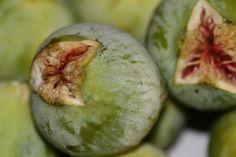 https://flic.kr/p/xAEGuv | dolce frutto