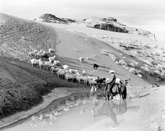 """""""The Navajos have long raised sheep to provide them with wool to weave blankets and for meat. Despite a forced stock reduction in the 1930s that caused a great deal of controversy, the Navajos maintain their identity as sheep ranchers into the present day."""" (NAU Cline Library) Caption at link"""
