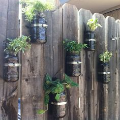 Mason jars filled with a variety of ivy. I used pipe fasteners screwed to the fence and then tightened the fastener against the jar. Leave enough room at the top for the water to be absorbed by the soil.