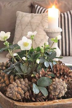 pine cones, helleborus and candle - pretty Christmas arrangement Christmas Flowers, Winter Christmas, All Things Christmas, Christmas Home, Christmas Crafts, Simple Christmas, Pine Cone Decorations, Christmas Decorations, Table Decorations
