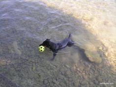 Top dog friendly beaches in Croatia Small Pine Trees, Shade Tent, Dog Shower, Dog Friends, Bald Eagle, Croatia, Beaches, Dogs, Animals