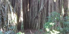 Lost Virtual Tour Hawaii: