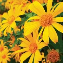 Summer Flowers for the Desert Garden - Phoenix Home & Garden sunflower