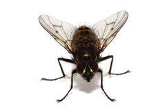 Cómo deshacerse de las moscas en el hogar http://www.pinterest.com/juliydavi/trucos-faciles/