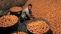 - Um vendedor prepara um doce especial antes do Eid al-Fitr, em Jalalabad, no Afeganistão. Foto: Parwiz / Reuters