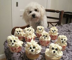 Funny and Cute Dog | funny cute cupcakes dog