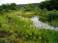A well established wildlife pond