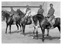 Until recent decades in Hungary, horses were roped into many types of services, including providing mounts for cavalry. Military Photos, Axis Powers, Foreign Policy, Soldiers, Ww2, World War, Equestrian, Guns, Germany