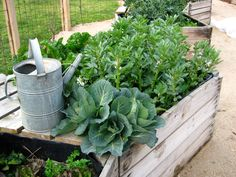 The Little Veggie Patch Co – Seed to Table -The edible vegie garden specialists Raised Planter, Raised Garden Beds, Raised Gardens, Raised Beds, Veggie Box, Veggie Patch, Indoor Garden, Outdoor Gardens, Apple Crates