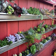 The gutter gardens are filling in. #succulentwall #guttergarden #containergarden #succulents #verticalgardens #faroutflora
