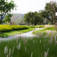 A map of the best contemporary landscape architecture projects from around the world. Plant Design, Garden Design, Meadow Garden, Different Plants, Contemporary Landscape, Modern Landscape Design, Parcs, Ornamental Grasses, Landscaping Plants