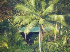 Off the beaten track in Costa Rica Property Listing, Costa Rica, Plant Leaves, Track, App, Plants, Runway, Truck, Apps