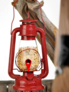http://www.gardeners.com/buy/hurricane-lantern-glass-bird-feeder/8591571.html