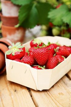 How to grow strawberries- an easy step-by-step guide to growing your own fruit in garden beds or pots and hanging baskets -  on HOUSE by House & Garden.