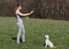 Dog Behavior | 5 Tips for Training Your Puppy | Pets Best