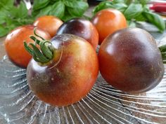 Beautiful Indigo Rose Tomato. A new and healthy variety.