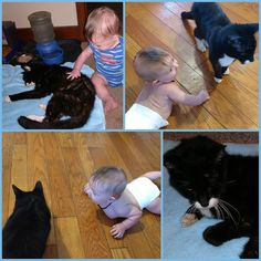 We said goodbye to Midnight this morning. My heart aches.  #RIP #LoveMyCat #FurBaby